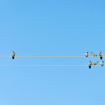 Birds on telephone lines