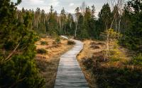 In the bottom center of the photograph is a long, winding wooden sidewalk leading up towards the center of the picture. To the left and right of the sidewalk are areas of dry brush. And in the background of the photograph on all sides is a forest full of