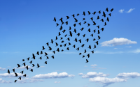 Mindfulness links to transformational leadership
