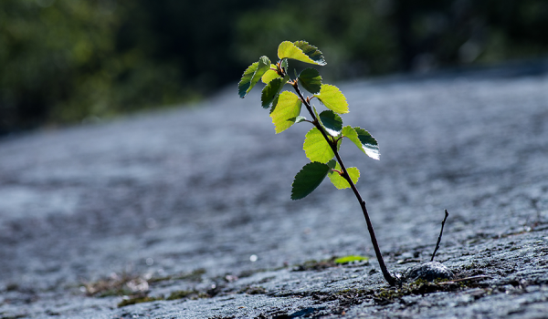 Resilience: A common or not-so common phenomenon